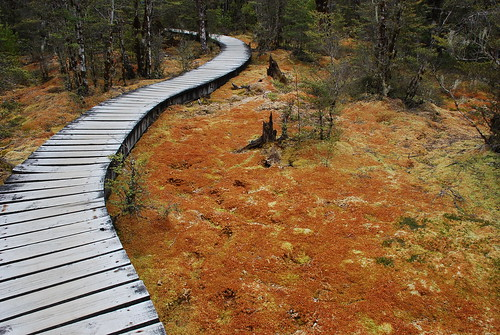 brentdaily's photo of the boardwalk, Day 3 - Milford Track.