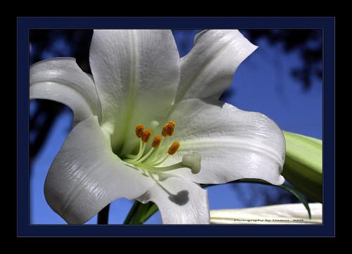fabulous wmp fantasticflower outofnature gemsofnature awesomeblossoms simplythebest~flowers vosplusbellesphotos photographersworldbestfriends