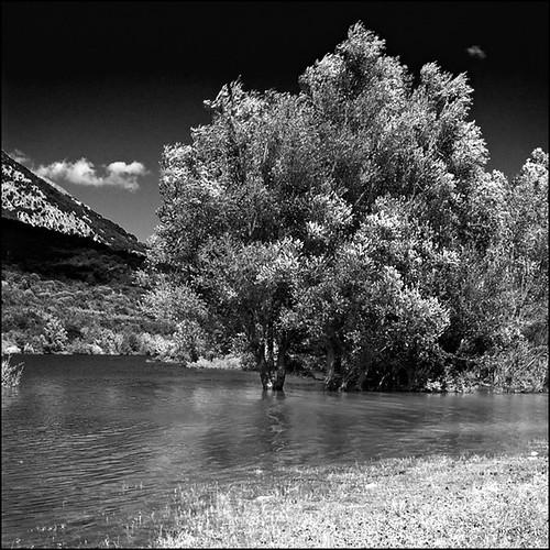 bw lake tree water canon square lago bn albero acqua quadrato barrea francescosaveriofienga