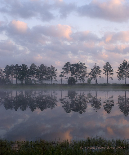 pink seascape water weather fog gardens pine sunrise wonder landscape pond day purple cloudy stillness daybreak conifer yahoonews groundfog explored stjohnscounty laurieb nikond80 dpca stjohnscountyagriculturalcentermastergardens floridasbridingandphotofest radiationgroundfog lbricephoto agriculturalcentermastergardens dailynaturetnc10 photocontesttnc10