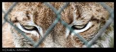- behind bars -