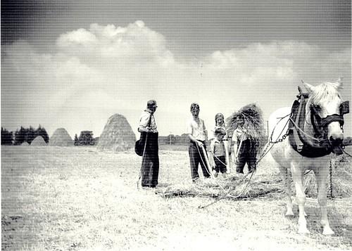 Saving the hay