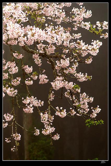 Photo:墜落 By leeyu_flickr