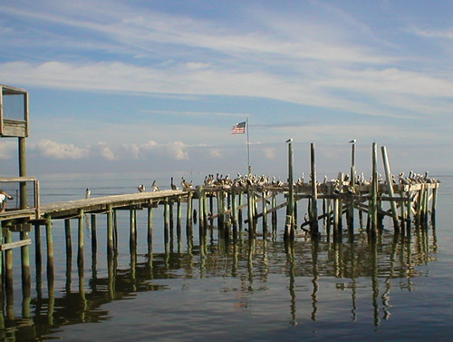 gulfofmexico pier florida pelican 35mmfilm cedarkey pentaxzx50