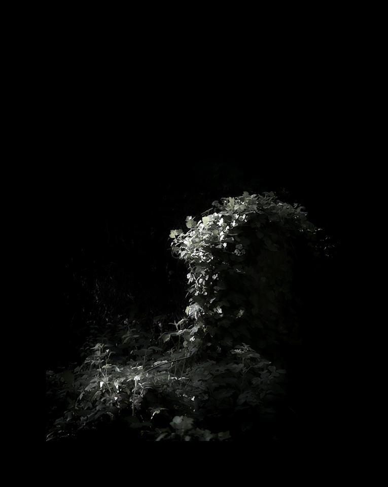Photography: Grave Leaf by Nicholas M Vivian