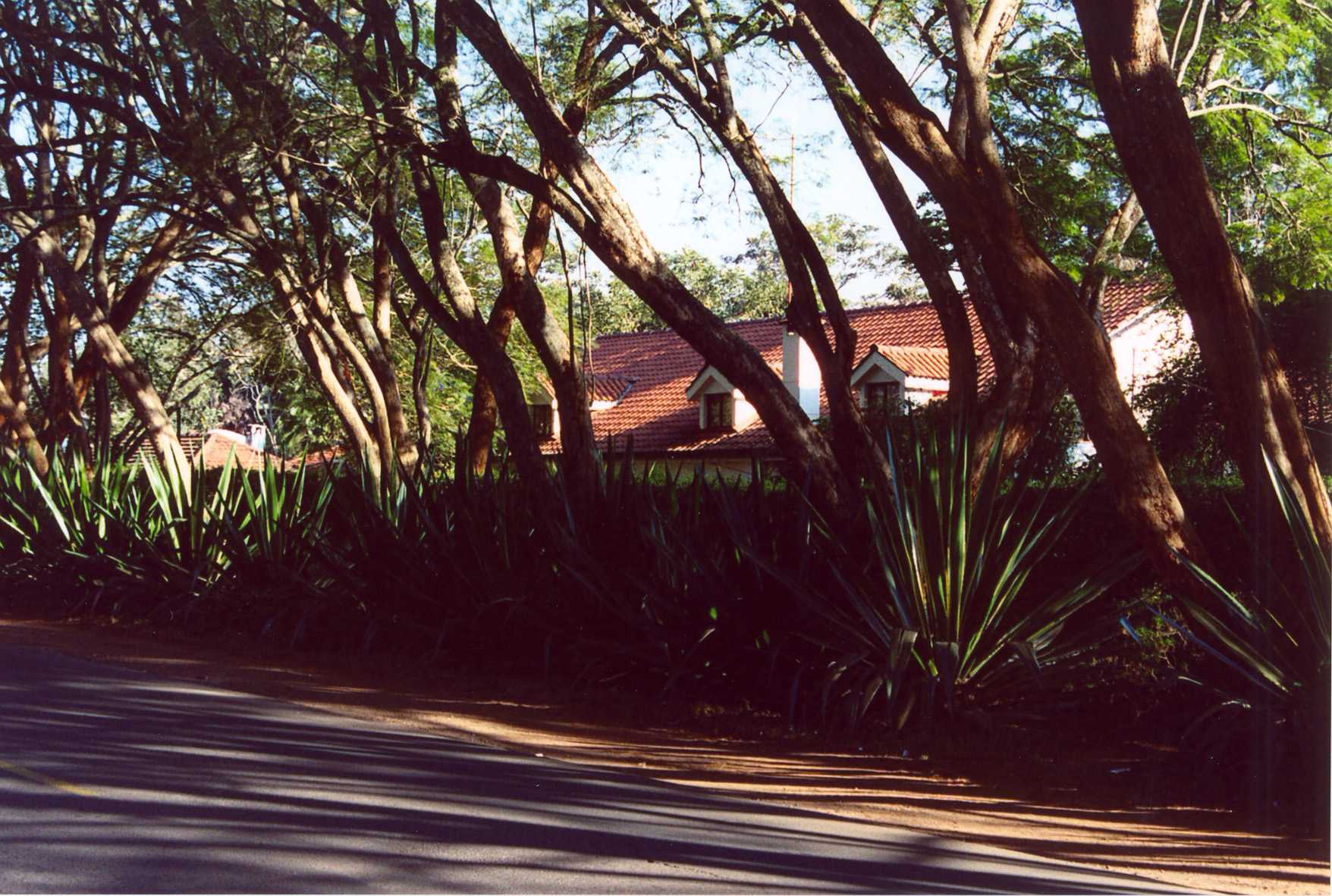 Riverside - Nice house behind plant wall (July 2003)