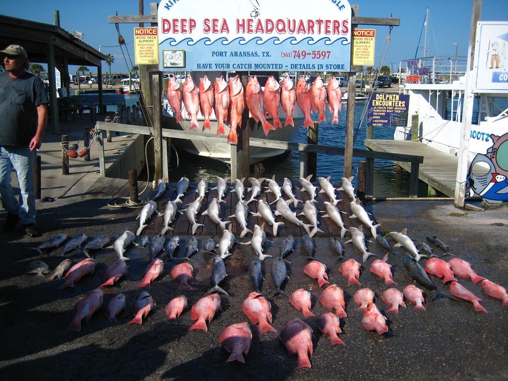 corpus christi offshore fish