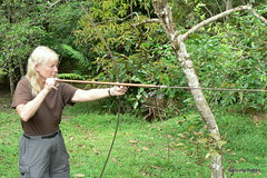woodland(0.0), jungle(0.0), branch(1.0), weapon(1.0), longbow(1.0), tree(1.0), bow and arrow(1.0),