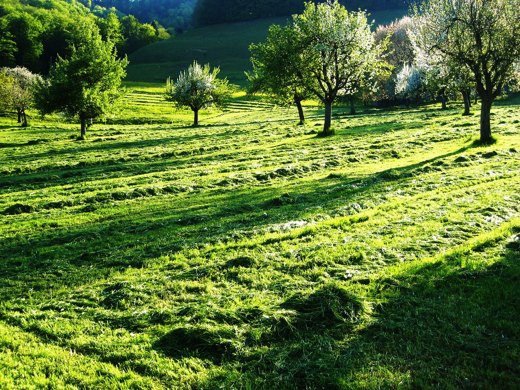 Smell the fresh cut grass