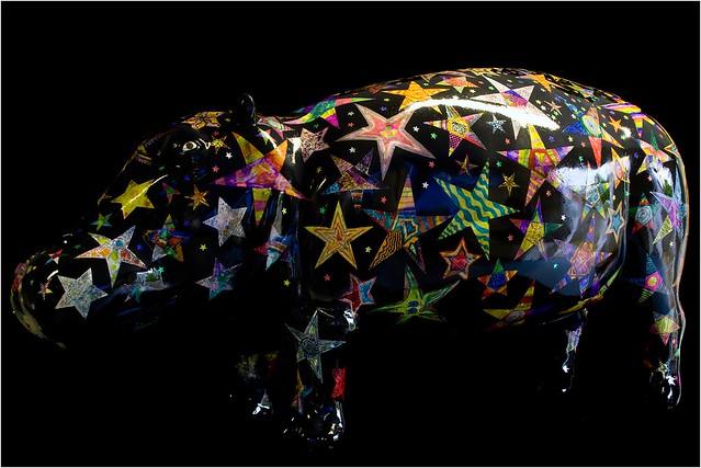 Hippo Portraits