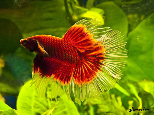 New betta fish is sluggish and not eating fish care for What do betta fish eat