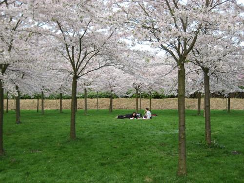 Hanami 2009 in Japanse kersenbloesemtuin