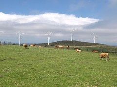 prairie, farm, machine, windmill, field, plain, wind, wind farm, meadow, pasture, rural area, wind turbine, grassland,