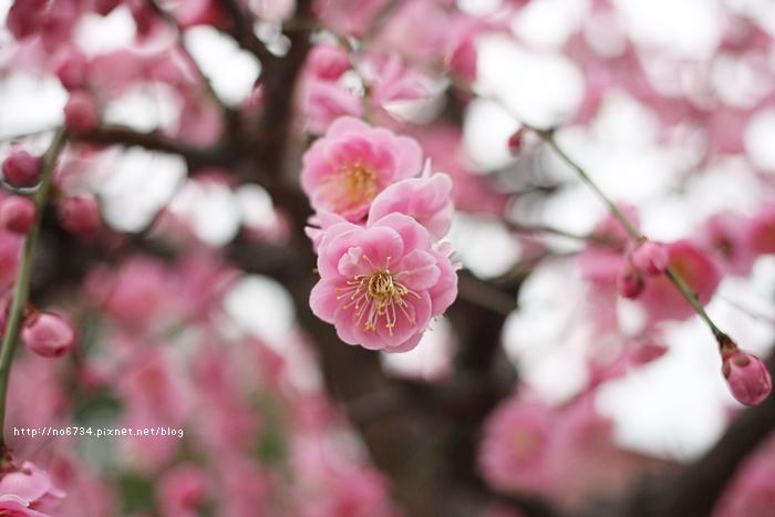 20140301_Fukuoka_1103 f