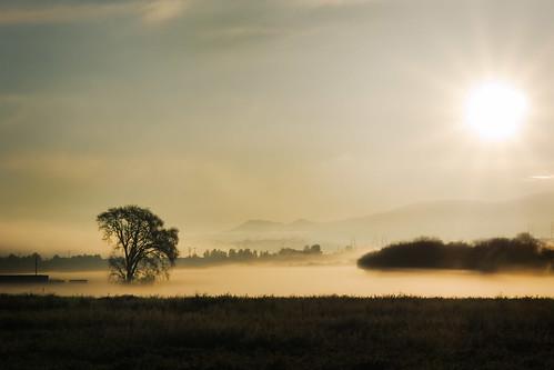 california fog sunrise landscape 2009 tule castaic muzzlehatch ilmigliorfabbro