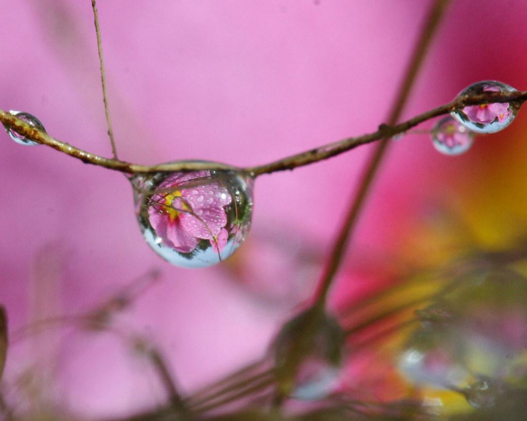 Drops within drops by Mukumbura
