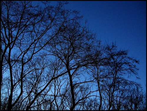 Trees, Dusk
