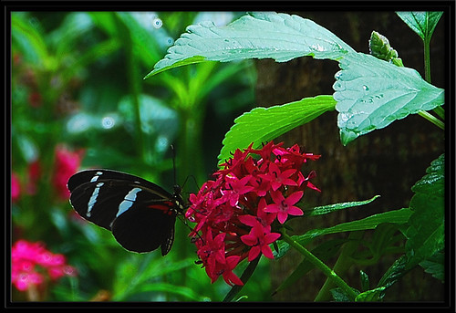 flowers red portrait color macro green nature butterfly wings nikon vivid nikond80