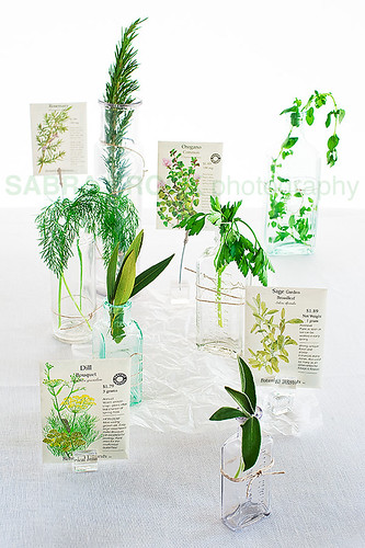 herbs and seeds wm 7710