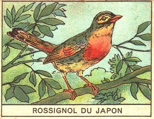oiseaux mart 10