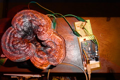 augmented mushroom
