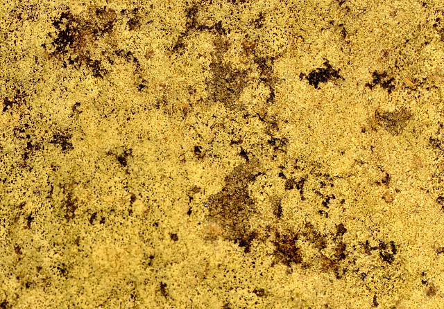 Callan Park – sandstone with lichen