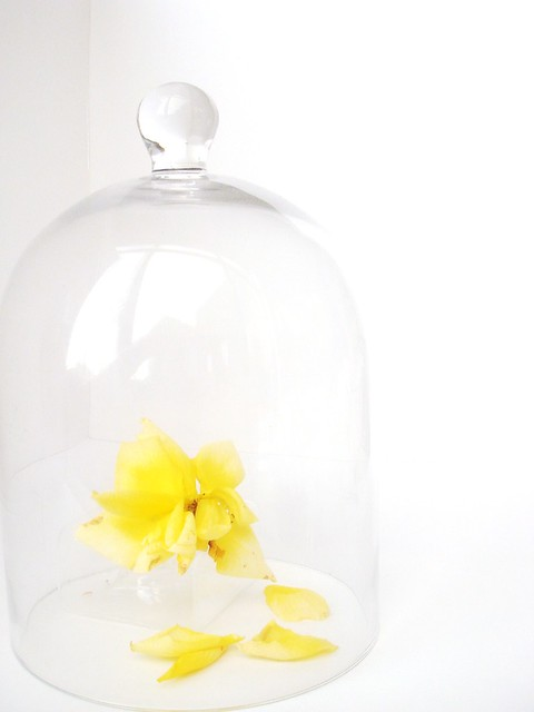Yellow rose under glass dome flickr photo sharing for Rose under glass
