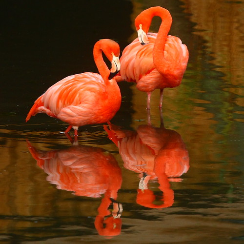 """ It Takes Two, To Flamingo ~ Sorry ~ Tango ""  !"