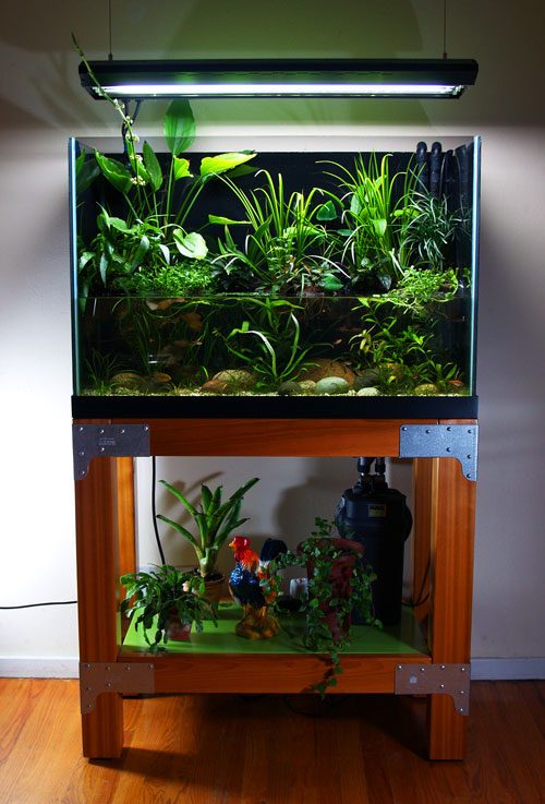65 gallon riparium totm 12 09 the planted tank forum for 65 gallon fish tank