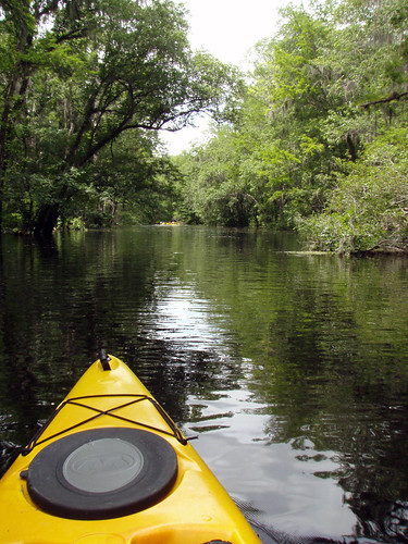unitedstates florida kayaking ichetuckneeriver fortwhite ichetuckneespringsstatepark 116kmwofjacksonville