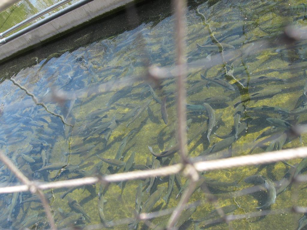 Blue hole ohio around guides for Fish hatchery ohio