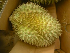 2009/05/17 - 15:56 - I found durians sold in a super market in Japan. These were imported from Thai.