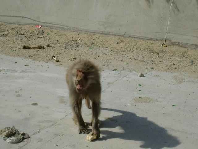 Survival skills for monkeys youtube