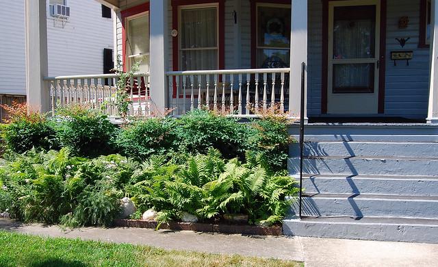Landscaping With Ferns : Landscaping with ferns flickr photo sharing