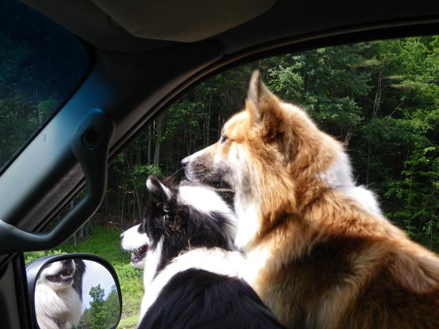 My happy pups
