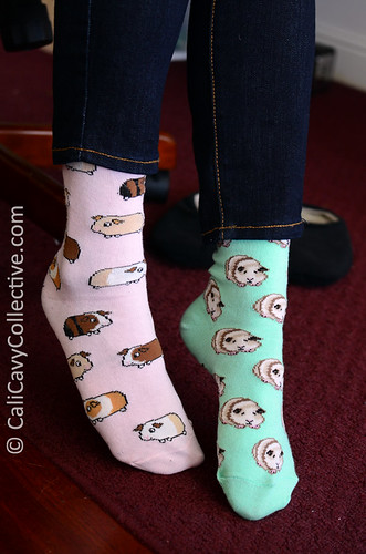 Wearing guinea pig ankle socks