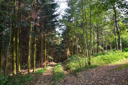 Ein Weg durch den dunklen Wald