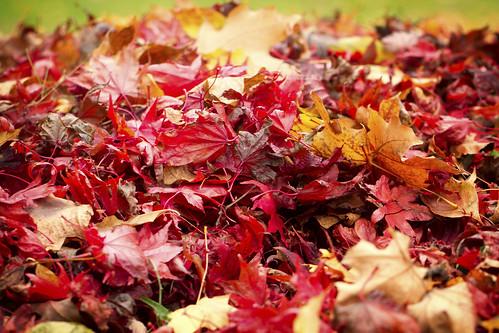 11-13 fall-9494-Edit-2
