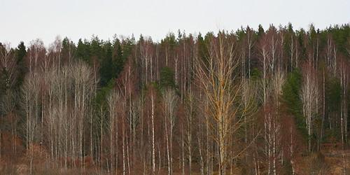 autumn trees leafless