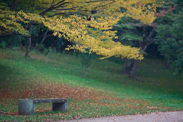 椿谷の紅葉 3