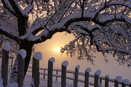 november winter light snow tree sunrise fence licht ast branch zaun sonnenaufgang baum appletree apfelbaum 2013 hohenkasten bestcapturesaoi elitegalleryaoi nex7 renatedodell