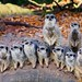 Bristol Zoo - meerkats by Chris Bertram