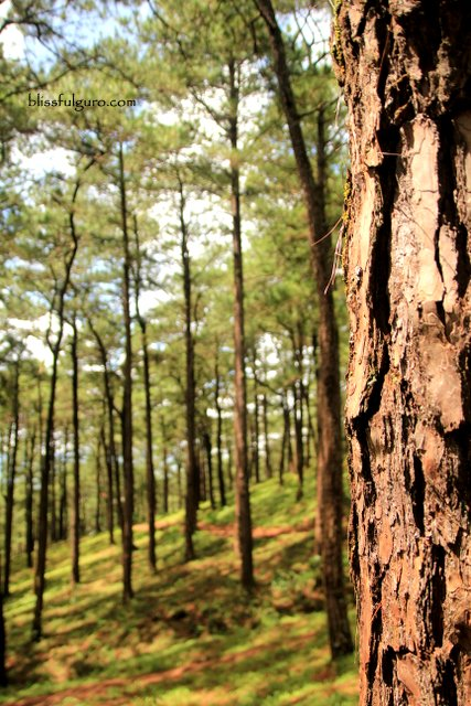 Camp John Hay Eco Trail Baguio City