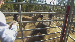 Horse-Hits-Head