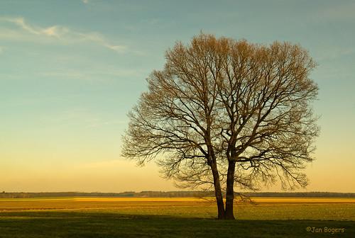 tree nature netherlands twins nederland natuur boom arbre paysbas jumelles d800 noordbrabant jumeaux roosendaal tweeling janbogers treesdiestandingup