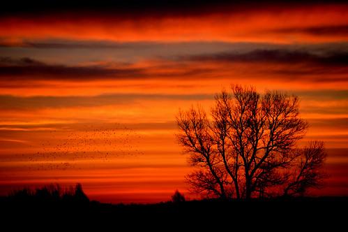 morning tree sol birds sunrise morgen solopgang