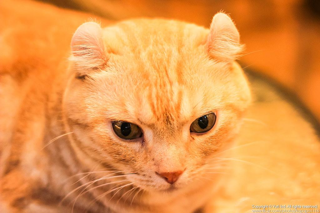 元氣貓主題餐廳 IMG_6087
