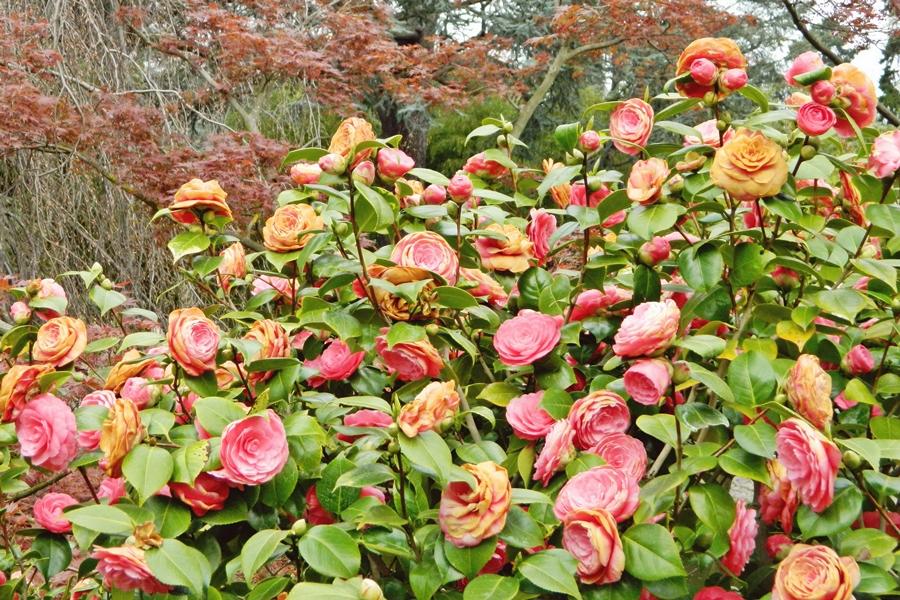 Jardin japonais Albert Kahn (7)