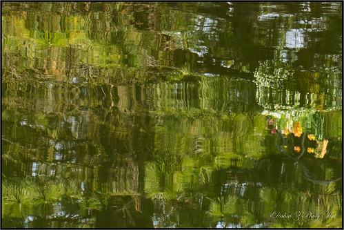 green cantignypark wheatonillinois