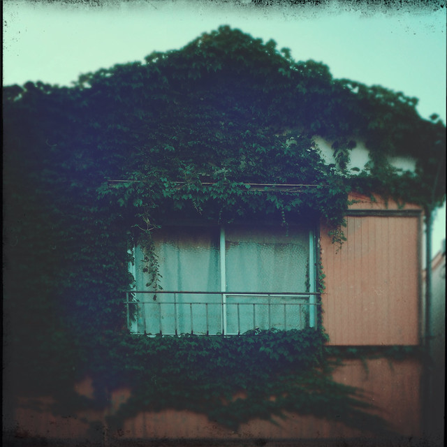 House covered by plant